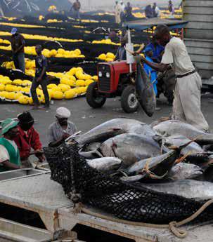 Abidjan fishing port