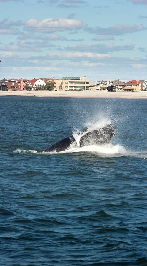 baleines-new-york