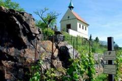 vineyard-st-clare-praha