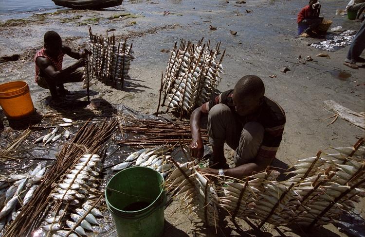 vendeur de poisson -mozambique