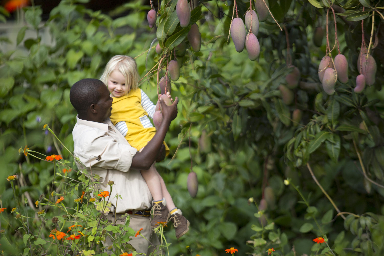 Picking-fruit