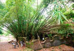 Un site enfoui dans la forêt équatoriale