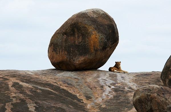 Serengeti, la terre des plaines infinies
