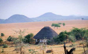 Out of Africa in Uganda 6