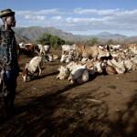 Au loin, les montagnes Ougandaises o s'affrontent les tribus Turkanas, Tepeth et Dodoth, pour le contr™le des points d'eau.