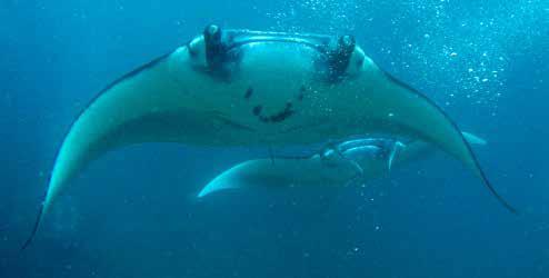 Snorkeling in Komodo