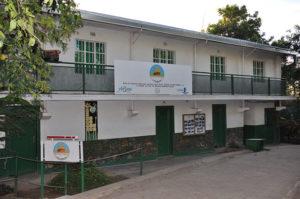 Lubumbashi's Termites Museum