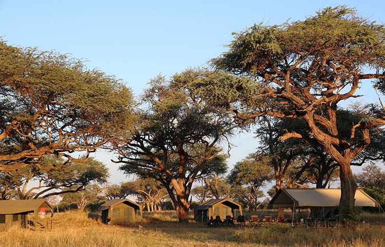 Into Botswana' wilderness