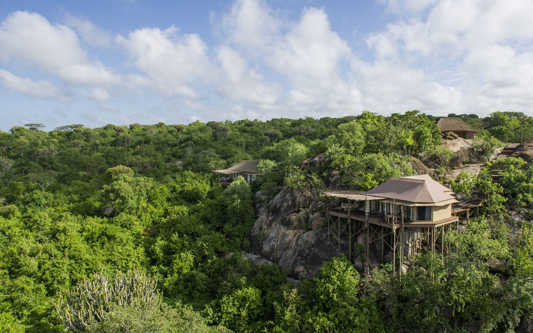 Legendary Expeditions in Tanzania's Mwiba Wildlife Reserve